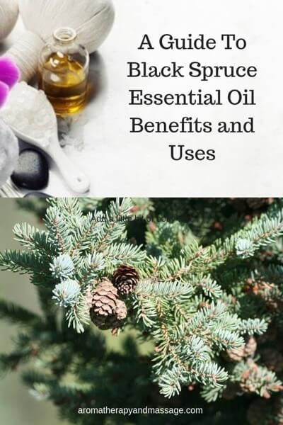 A Guide To Black Spruce Essential Oil and Its Benefits and Uses In Aromatherapy
