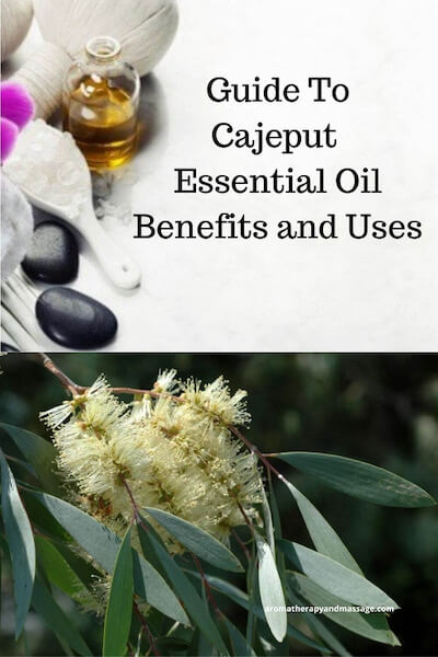 Aromatherapy supplies with the words Guide To Cajeput Essential Oil Benefits and Uses and photo of a cajeput plant.