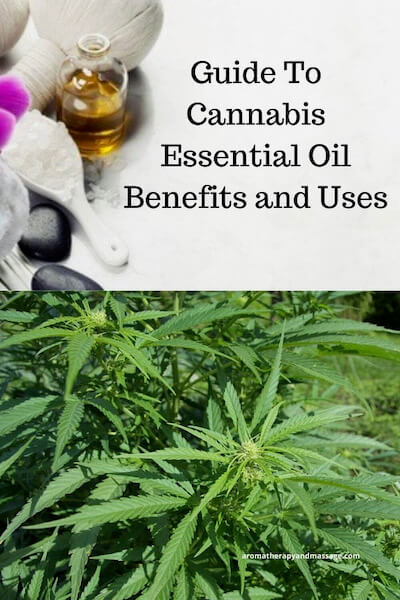 Aromatherapy supplies with the words Guide To Cannabis Essential Oil Benefits and Uses and photo of the Cannabis sativa plant