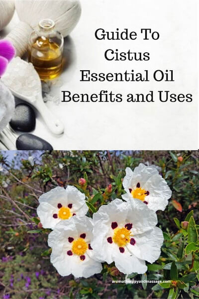 Aromatherapy supplies with the words Guide To Cistus Essential Oil Benefits and Uses and photo of a cistus flower.