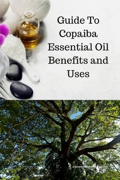 Aromatherapy supplies with the words Guide To Copaiba Essential Oil Benefits and Uses and photo of a copaiba tree.