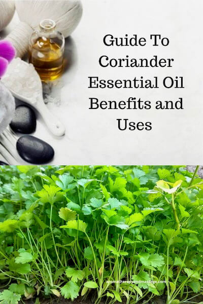 Aromatherapy supplies with the words Guide To Coriander Essential Oil Benefits and Uses and photo of a coriander plant.