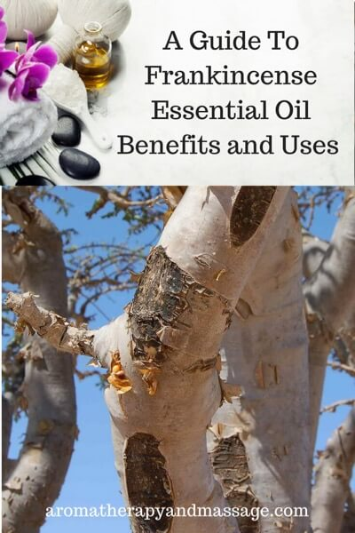 A Guide To Frankincense Essential Oil and Its Benefits and Uses In Aromatherapy