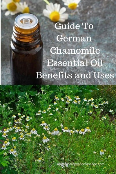 A Guide To German Chamomile Essential Oil and Its Benefits and Uses In Aromatherapy