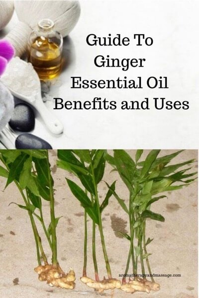 A Guide To Ginger Essential Oil and Its Benefits and Uses In Aromatherapy