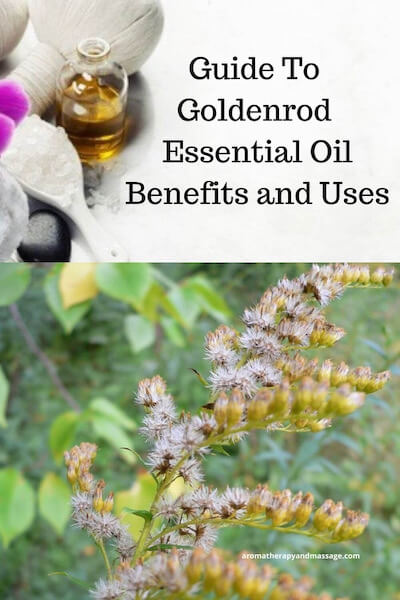 Aromatherapy supplies with the words Guide To Goldenrod Essential Oil Benefits and Uses and photo of a goldenrod plant.