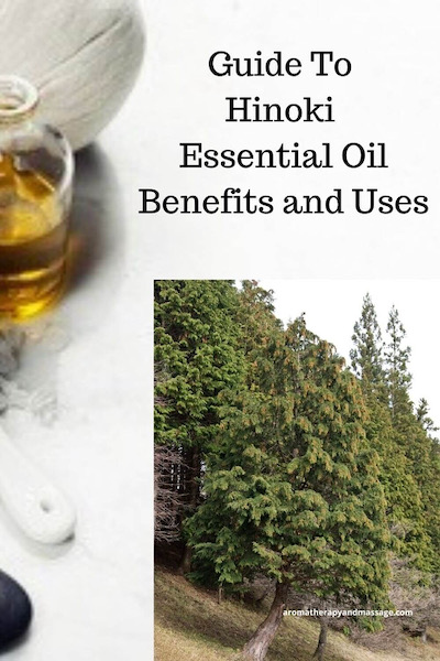 Aromatherapy supplies with the words A Guide To Hinoki Essential Oil Benefits and Uses and photo of a hinoki tree.
