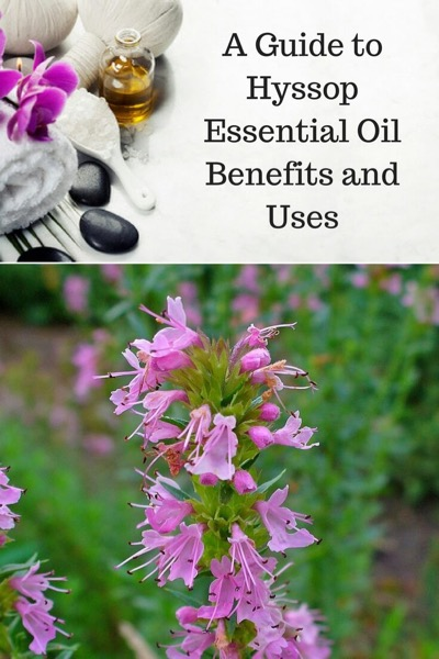 Guide To Hyssop Essential Oil and Its Benefits and Uses