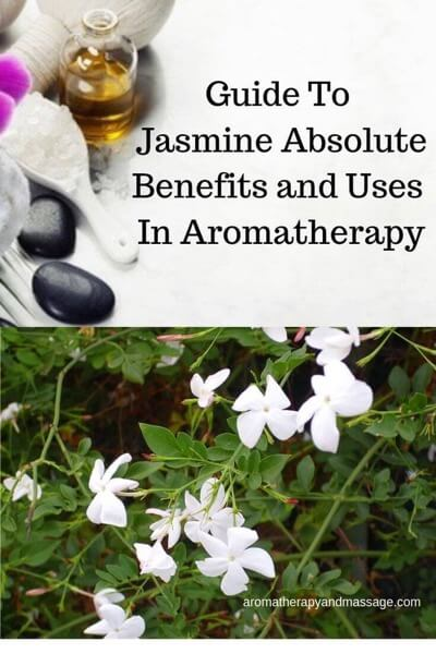Guide To Jasmine Essential Oil (Absolute) and Its Benefits and Uses In Aromatherapy