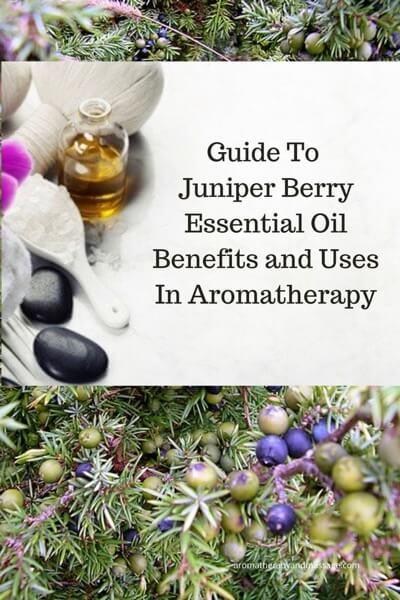 A Guide To Juniper Essential Oil and Its Benefits and Uses