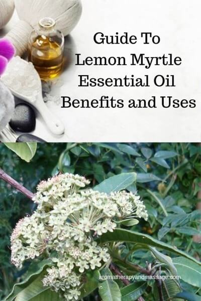 A Guide To Lemon Myrtle Essential Oil and Its Benefits and Uses In Aromatherapy