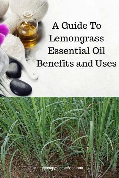 A Guide To Lemongrass Essential Oil and Its Benefits and Uses