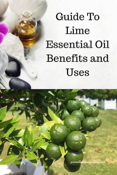 Aromatherapy supplies with the words Lime Essential Oil Benefits and Uses and photo of lime tree.