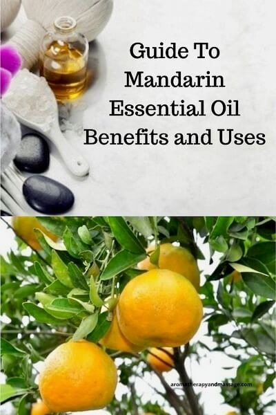 Aromatherapy supplies with the words Guide To Mandarin Essential Oil Benefits and Uses and photo of mandarins on tree.