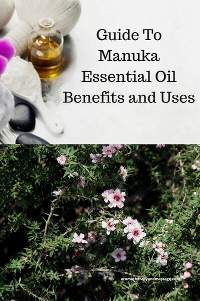 Aromatherapy supplies with the words A Guide To Manuka Essential Oil and Its Benefits and Uses and photo of a manuka tree