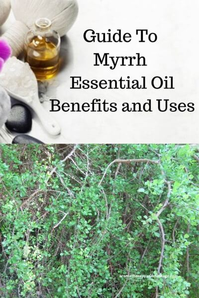 Guide To Myrrh Essential Oil and Its Benefits and Uses In Aromatherapy