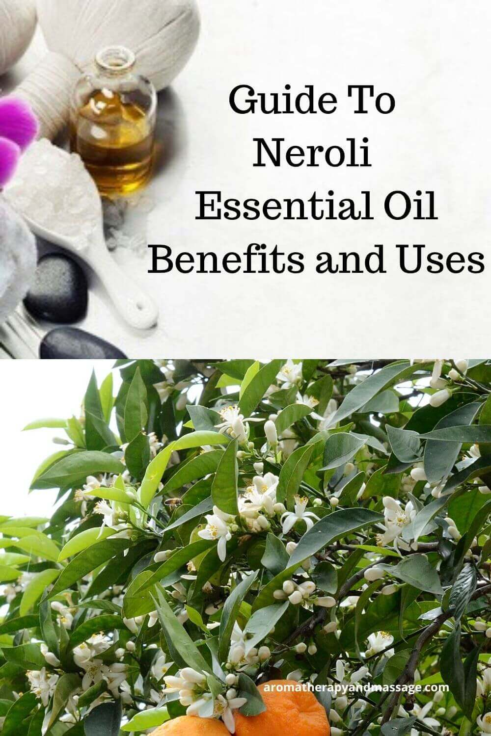 Guide To Neroli Essential Oil and Its Benefits and Uses In Aromatherapy