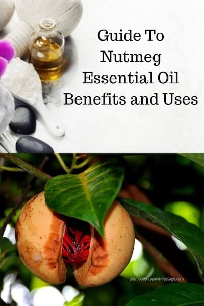 Aromatherapy supplies with the words A Guide To Nutmeg Essential Oil and Its Benefits and Uses and photo of a nutmeg tree.