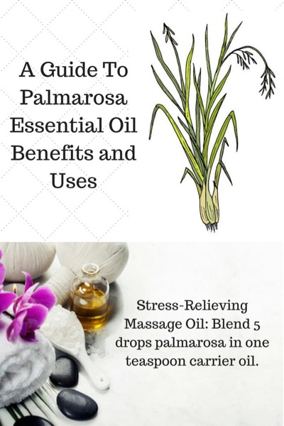 A Guide To Palmarosa Essential Oil and Its Benefits and Uses