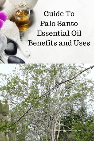 Aromatherapy supplies with the words Guide To Palo Santo Essential Oil Benefits and Uses and photo of a palo santo tree.