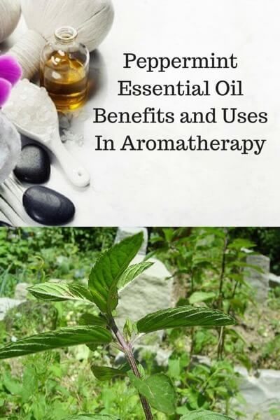 A Guide To Peppermint Essential Oil and Its Benefits and Uses