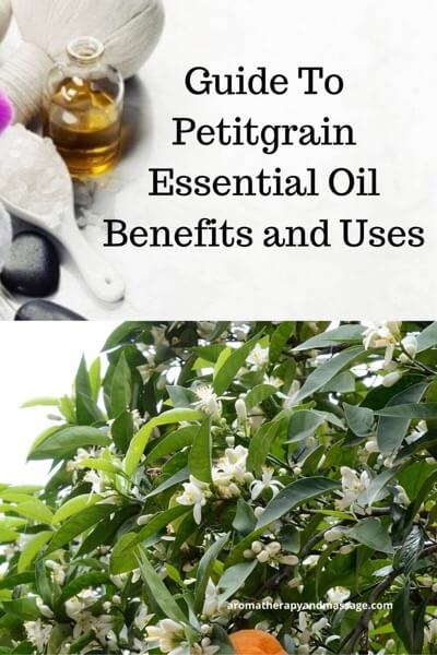 Guide To Petitgrain Essential Oil and Its Benefits and Uses In Aromatherapy