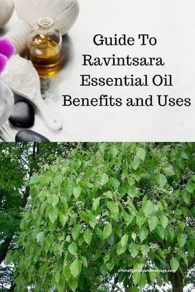 Aromatherapy supplies with the words A Guide To Ravintsara Essential Oil Benefits and Uses and photo of ravintsara leaves.
