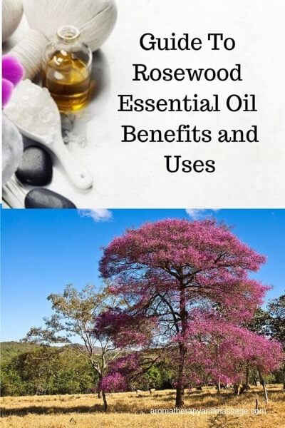 A Guide To Rosewood Essential Oil and Its Benefits and Uses In Aromatherapy