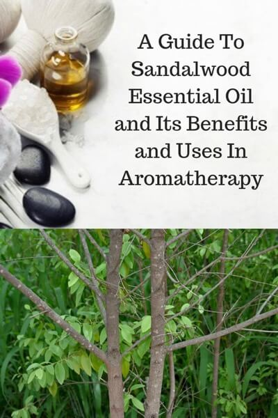 A Guide To Sandalwood Essential Oil and Its Benefits and Uses |