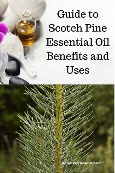 Guide To Pine Essential Oil and Its Benefits and Uses In Aromatherapy (photo of aromatherapy accessories and pine needles)
