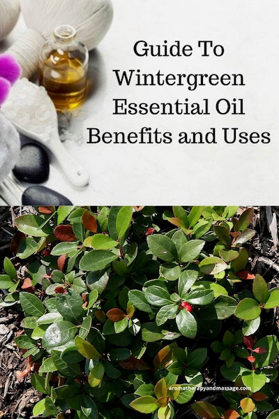 Aromatherapy supplies with the words Guide To Wintergreen Essential Oil Benefits and Uses and photo of the wintergreen plant.