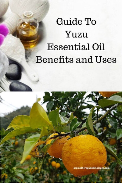 Aromatherapy supplies with the words A Guide To Yuzu Essential Oil Benefits and Uses and photo of yuzu tree and fruit.