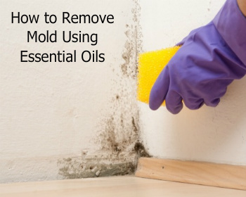 Mold on Wall | How to Remove Mold Using Essential Oils