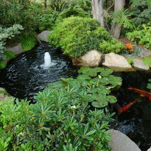 Meditative Garden - Psychotherapy Focusing Basics