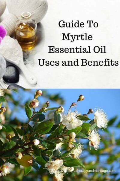 Aromatherapy supplies with the words Guide To Myrtle Essential Oil Benefits and Uses and photo of myrtle plant.