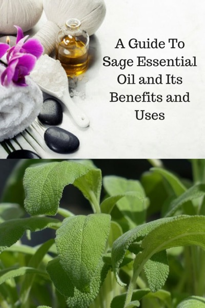 A Guide To Sage Essential Oil and Its Benefits and Uses | Top: A Sage Plant. Bottom: A massage oil recipe containing sage.