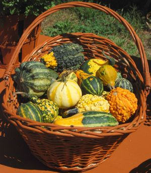 Fall Squash | Aromatherapy Home Recipes
