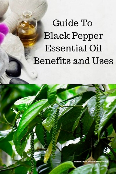 Aromatherapy supplies with the words Guide To Black Pepper Essential Oil Benefits and Uses and photo of pepper plant.