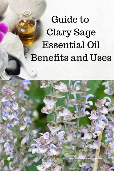 A Guide To Clary Sage Essential Oil and Its Benefits and Uses In Aromatherapy | Photos of the clary sage plant and aromatherapy accessories
