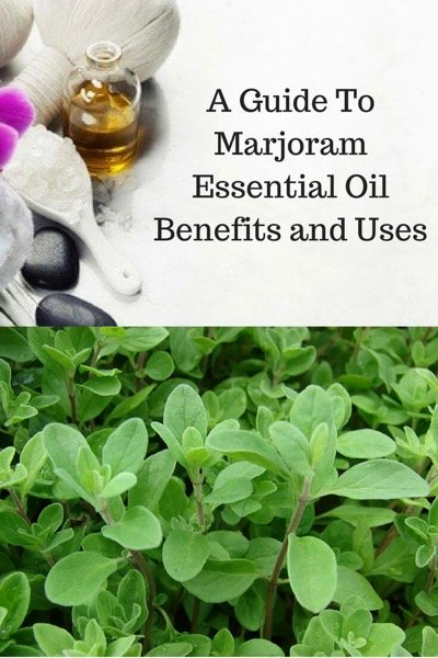 A Guide To Marjoram Essential Oil and Its Benefits and Uses