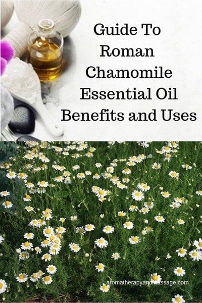 A Guide To Roman Chamomile Essential Oil and Its Benefits and Uses In Aromatherapy