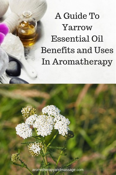A Guide To Yarrow Essential Oil and Its Benefits and Uses