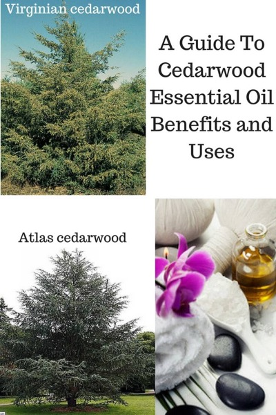 A Guide To Cedarwood Essential Oil with photos of Atlas and Virginian cedarwood