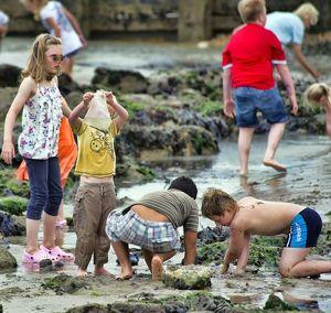 Children Playing | Essential Oils For Children