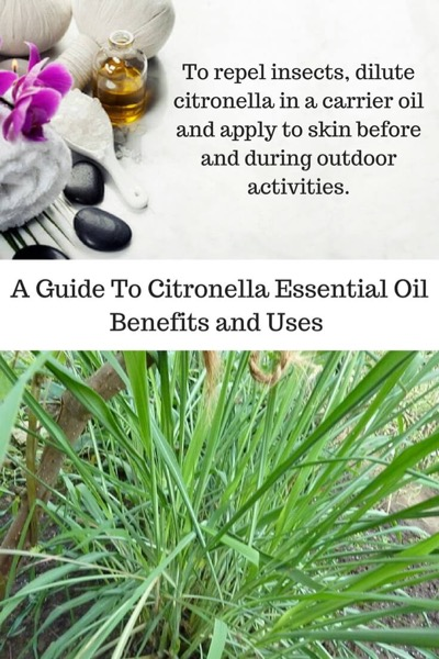 A Guide To Citronella Essential Oil and Its Benefits and Uses