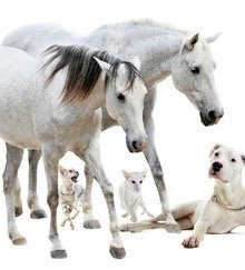 Horses, Cats, Dogs | Using Essential Oils For Pets