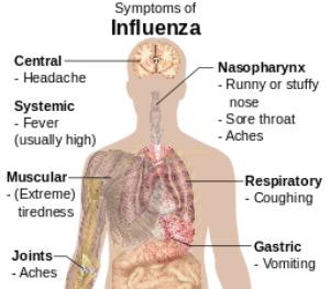Chart of Flu Symptoms | Using Essential Oils for Flu
